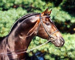 horse Donnerschlag (Oldenburg, 1987, from Donnerhall)