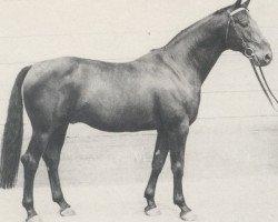 horse Kadett (Hanoverian, 1963, from Kurier)