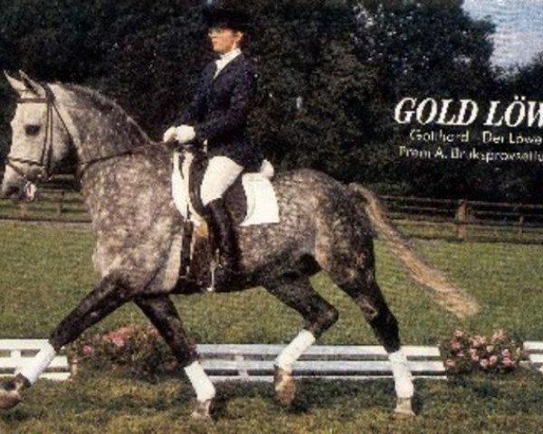 horse Goldloewe (Hanoverian, 1977, from Gotthard)