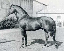 horse Cromwell (Holsteiner, 1960, from Cottage Son xx)