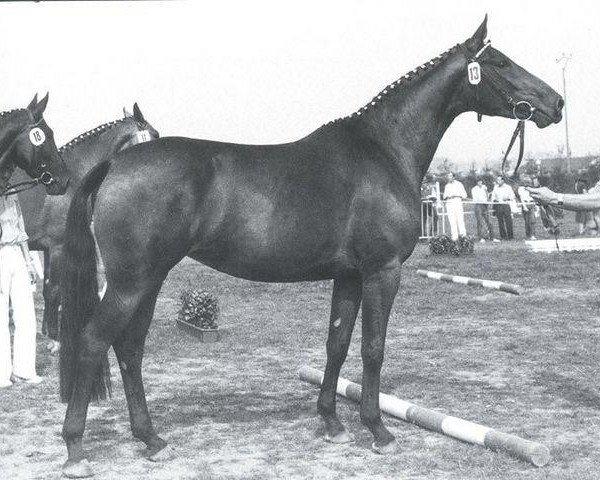 horse Raute (Rhinelander, 1979, from Rheingold)