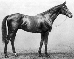 horse Prince Palatine xx (Thoroughbred, 1908, from Persimmon xx)