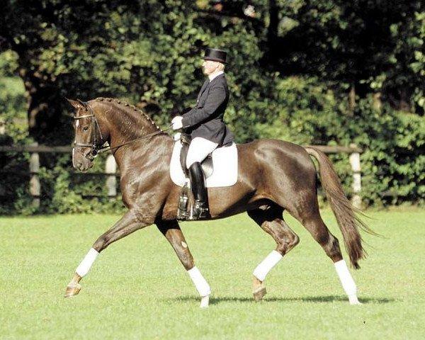 horse Royal Hit (Oldenburg, 2000, from Royal Dance)