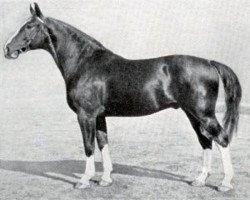 horse Ast (Hanoverian, 1934, from Alter Dessauer)