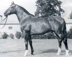 horse Consul (Holsteiner, 1960, from Cottage Son xx)
