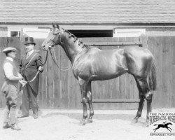 horse Sunstar xx (Thoroughbred, 1908, from Sundridge xx)
