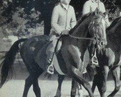 horse Gong (Hanoverian, 1949, from Goldmann)