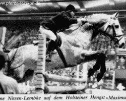 horse Maximus (Holsteiner, 1963, from Manometer xx)