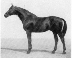 horse Wilder Jaeger (Trakehner, 1940, from Wildbach)