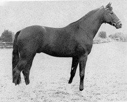 horse Seeadler (Trakehner, 1971, from Habicht)