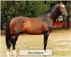 horse Rocadero (Holsteiner, 1980, from Ronald)