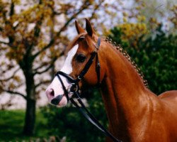 horse Top Nonstop (German Riding Pony, 1991, from Nantano)