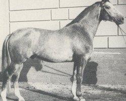 horse Westwind (Hanoverian, 1970, from Waidmannsdank xx)