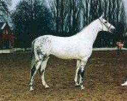 horse Bouquet AA (Anglo-Arabs, 1985, from Bajar ShA)
