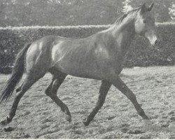 horse Jonkheer xx (Thoroughbred, 1948, from Magnat xx)