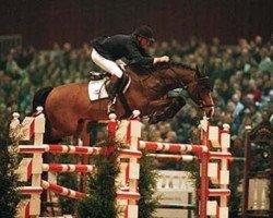 horse Caretano Z (Holsteiner, 1992, from Caretino)