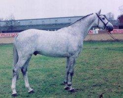 jumper Cardino (Holsteiner, 1993, from Carthago)