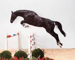 horse Armand xx (Thoroughbred, 2001, from Winged Love xx)
