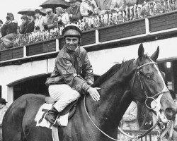 horse High Top xx (Thoroughbred, 1969, from Derring-Do xx)