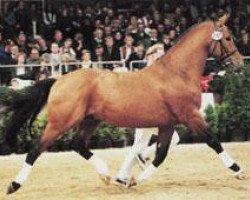 horse Azett (Hanoverian, 1987, from Aladin Z)