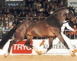 horse Leandro (Holsteiner, 1985, from Landgraf I)