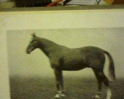 horse Malice xx (Thoroughbred, 1920, from Malandante xx)