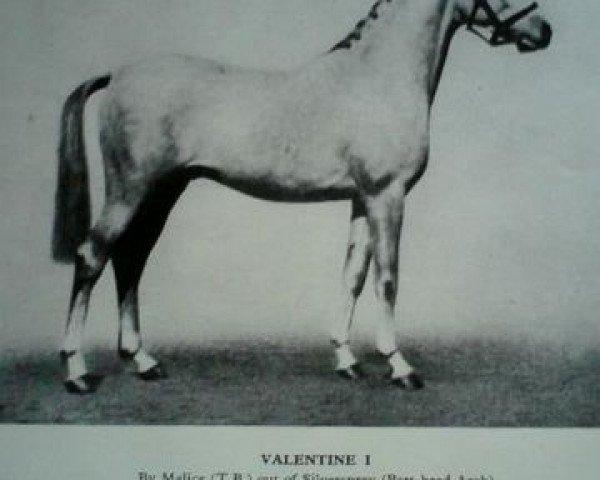 horse Valentine (British Riding Pony, 1933, from Malice xx)