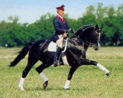 horse Paradiesvogel (Westphalian, 1989, from Parademarsch I)