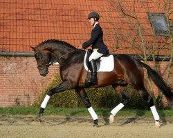 dressage horse Spielberg (Westphalian, 2004, from Sunny-Boy)
