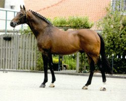 jumper Landlord (Holsteiner, 1983, from Landgraf I)