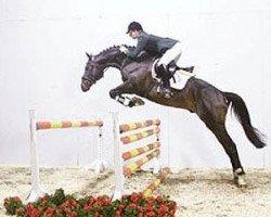 horse Esteban xx (Thoroughbred, 1994, from Prince Mab xx)