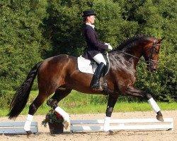dressage horse Danone I (Hanoverian, 2000, from De Niro)