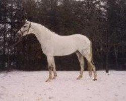 horse Bajar ShA (Shagya Arabian, 1969, from Suakim ShA)