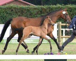 horse Fabienne II (Holsteiner, 1991, from Lord 1134)
