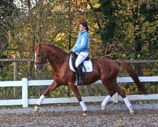horse Donauwalzer (Trakehner, 1995, from Sixtus)