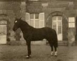 horse Lurioso (Anglo-Norman, 1955, from Furioso xx)