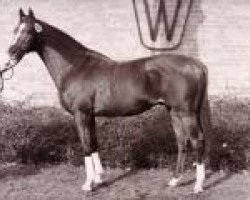 horse Marsvogel xx (Thoroughbred, 1980, from High Game xx)
