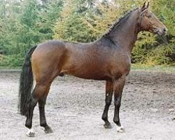 horse Chasseur I (Hanoverian, 1988, from Calypso II)