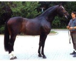 horse Charon (Hanoverian, 1993, from Classiker)