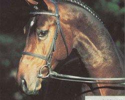 horse Di Versace (Hanoverian, 1996, from Davignon I)