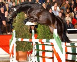 jumper Continus Grannus (Hanoverian, 2002, from Contendro I)