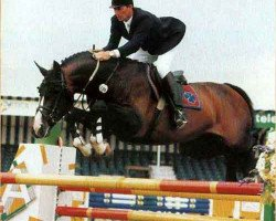 horse Concorde (Royal Warmblood Studbook of the Netherlands (KWPN), 1984, from Voltaire)