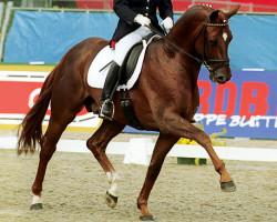 horse Dimaggio (Hanoverian, 1995, from Don Primero)