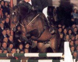 horse Landcapitol (Holsteiner, 1994, from Landadel)