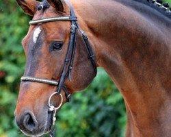 horse Amantus (Holsteiner, 1997, from Acord II)