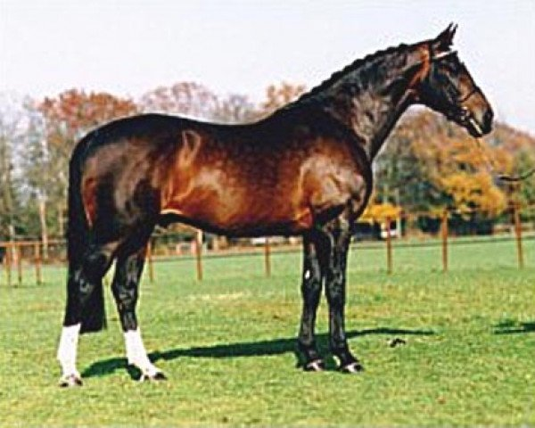horse Ulft (Royal Warmblood Studbook of the Netherlands (KWPN), 1978, from Le Mexico)