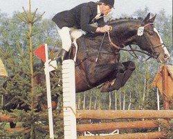 horse Tin Rocco (Holsteiner, 1970, from Tin Rod xx)