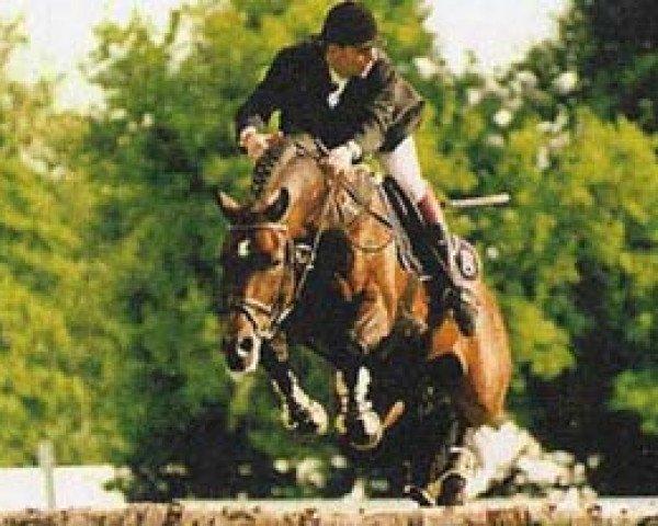 horse Lavall I (Holsteiner, 1986, from Landgraf I)
