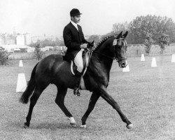 horse Ibikus (Trakehner, 1967, from Hertilas)