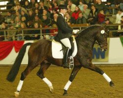 horse Chantre B (German Riding Pony, 1991, from Catherston Night Safe)